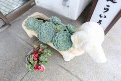 微小的多汁植物 免版税库存照片