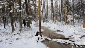 微小的小河在冬天森林里 免版税库存图片