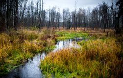 微小的小河在秋天森林里 免版税库存照片