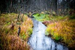 微小的小河在秋天森林里 免版税图库摄影