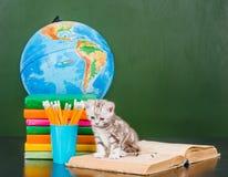微小的小猫坐开放书在空的绿色黑板附近 免版税库存图片
