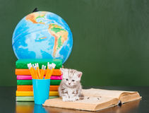 微小的小猫坐开放书在空的绿色黑板附近 库存照片