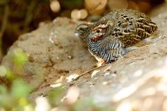 微小的布朗鸟 免版税库存照片