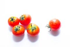 微小的新鲜的蕃茄 免版税库存图片