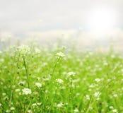 微小的春天花 库存图片
