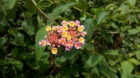 微小的桃红色花在森林里 图库摄影