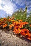微小的橙色花 免版税库存图片