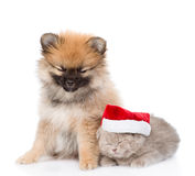 微小的波美丝毛狗小狗和苏格兰小猫与圣诞老人帽子一起睡觉 查出在白色 免版税库存图片
