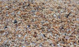 微小的海壳和蜗牛背景 库存照片