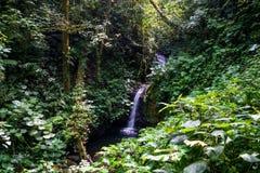 微小的瀑布在帕洛贝尔德国家公园 免版税库存图片