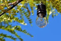 微小的电灯泡 免版税库存照片