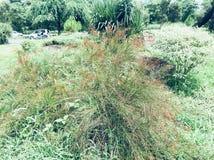 微小的红色花植物 免版税库存照片