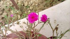 微小的花在庭院里 库存图片