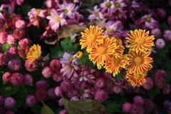 微小的花在清迈,北部泰国 图库摄影