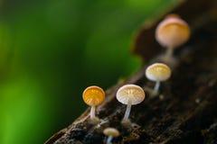 微小的蘑菇 免版税图库摄影