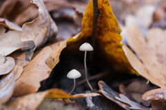 微小的蘑菇 库存照片