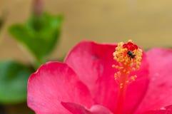 微小的蜂 免版税图库摄影