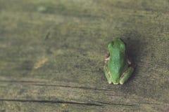 微小的青蛙在围场 免版税库存图片