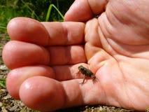 微小的青蛙坐一只人的手 库存图片