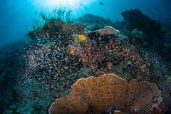 微小的鱼和美丽的礁石在王侯Ampat 免版税库存照片