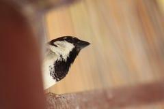 微小的鸟 免版税图库摄影