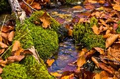 微小的水小河通过青苔和下落的叶子秋天, Radocelo山 库存照片
