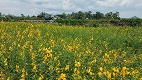 微小的黄色花和天空 库存图片