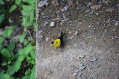 微小的黄色鸟坐石壁架 免版税库存照片