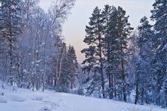 微明在冬天森林里。 免版税库存图片