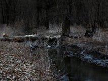 微明的森林河 免版税图库摄影