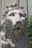 微暗的狮子 图库摄影