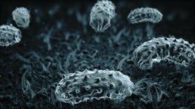 从微生物、细菌和病毒生活  高放大 医疗和科学动画 股票视频
