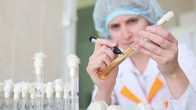 微生物学实验室,研究在管的材料 股票视频