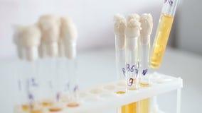 微生物学实验室,研究材料 股票视频