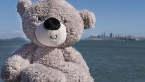 微笑为一张照片的灰色长毛绒熊在Sausalito,旧金山 免版税库存图片