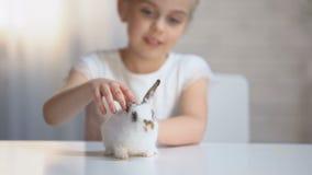 微笑可爱的女孩体贴抚摸一点蓬松兔宝宝和,儿童幸福 股票视频