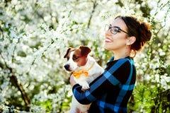 微笑和在手上的年轻美丽的妇女拿着一条狗杰克罗素狗在背景春天开花 免版税图库摄影