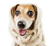 微笑在头饰的逗人喜爱的狗 免版税库存照片