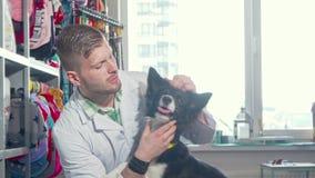 微笑对照相机的英俊的快乐的男性兽医,拥抱可爱的狗 影视素材