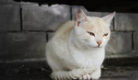 微笑猫 库存照片