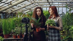 微笑的女孩博客作者和花匠围裙的拿着花并且谈话,当记录录影博克在网上的时 股票视频