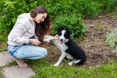微笑的年轻有吸引力妇女拥抱huging的逗人喜爱的小狗博德牧羊犬在夏天城市公园室外背景中 库存图片