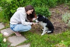 微笑的年轻有吸引力妇女拥抱huging的逗人喜爱的小狗博德牧羊犬在夏天城市公园室外背景中 图库摄影