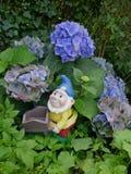 微笑的庭院变矮小与一个蓝色帽子、救生服和一辆独轮车在蓝色八仙花属之间 免版税库存图片