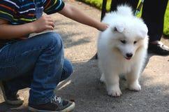 微笑的愉快的男孩使用与一条逗人喜爱的爱犬,一只白色日本波美丝毛狗小狗,在街道上在一个晴朗的夏日 免版税库存照片