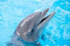 微笑的海豚在水中 免版税库存照片