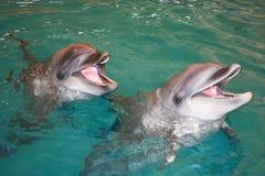 微笑的海豚在绿松石水中 库存照片