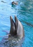 微笑的海豚 免版税库存照片