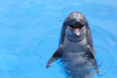 微笑的海豚 免版税库存图片