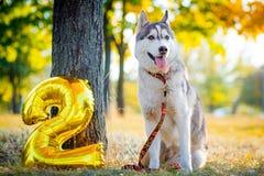 微笑的狗庆祝他的生日 库存照片
